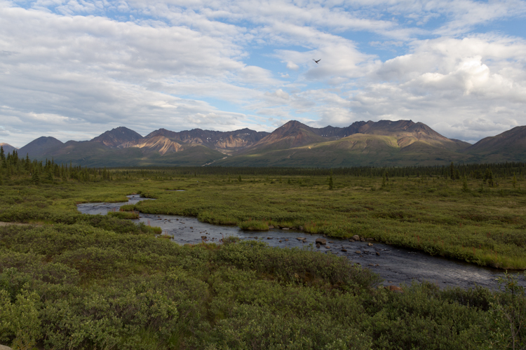 On the Denali Highway