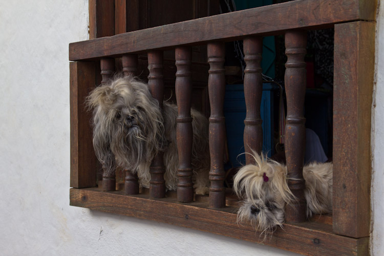 Colombia: Central Highlands - Barrichara: Beware of the dog