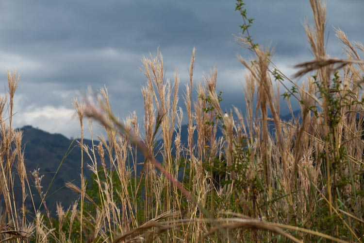 Colombia: Southern Region -Tierradentro: on the hike