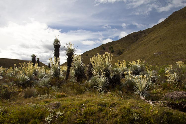 Colombia: Central Highlands - way to NP Cocuy: wilderness