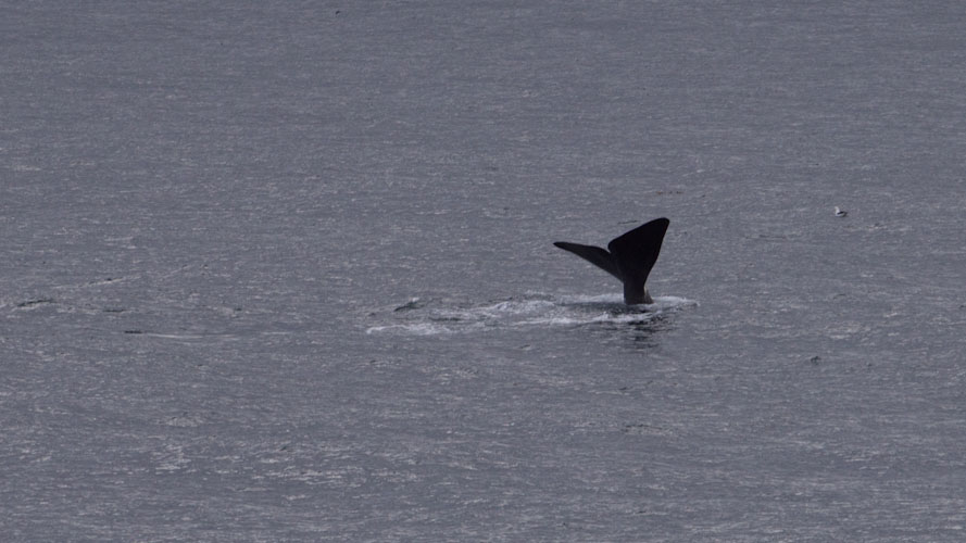 Chile: Navimag - Whales