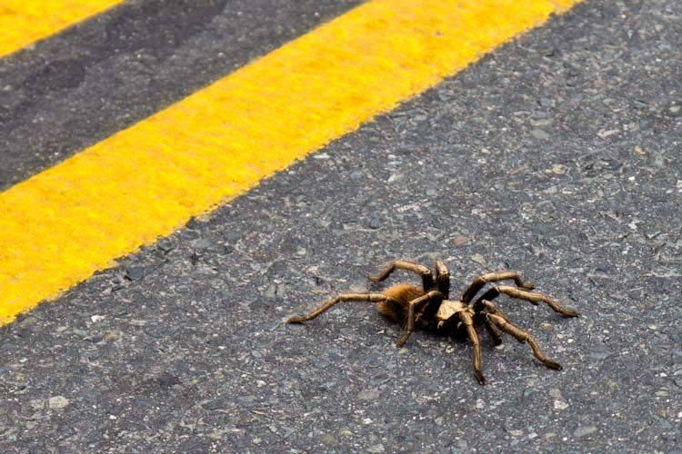 Riesige Spinne / Huge Spider