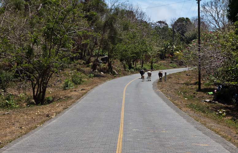 Nicaragua: Ometepe - the traffic on the road